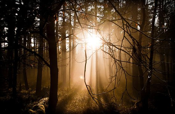 Low sun in the forest