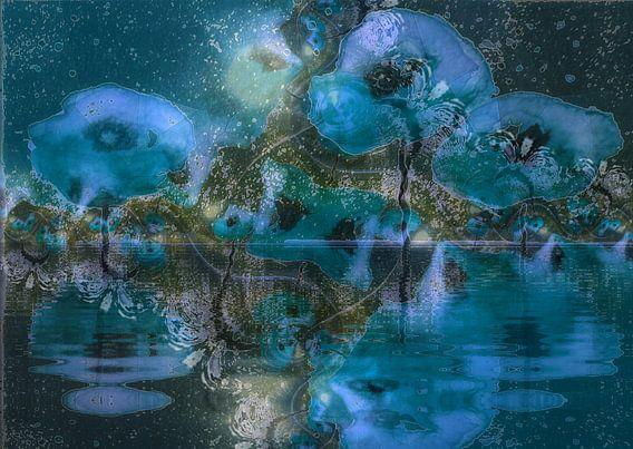 Poppy - abstract