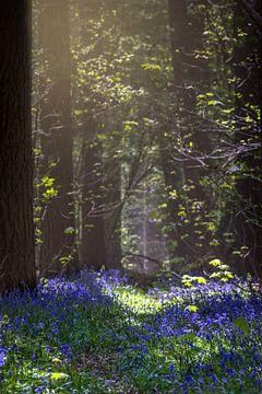 forêt de hallebardes sur Christophe Van walleghem