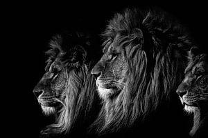 De Leeuwenkoning (zwart/wit) van