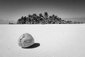Kokosnoot op onbewoond eiland, Aitutaki