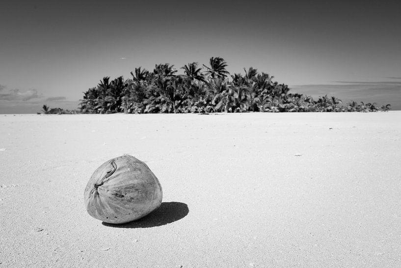 Kokosnoot op onbewoond eiland, Aitutaki van Laura Vink