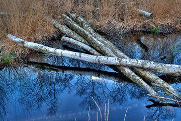 Berkenbomen in natuurgebied bij Winterswijk von Tonko Oosterink
