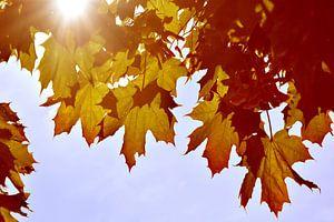 Herbstlaub im Gegenlicht von Markus Jerko