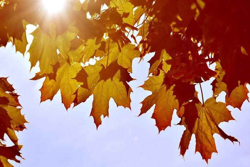 Feuilles d'automne à contre-jour sur Markus Jerko