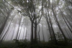 Geheimzinnig landschap met bomen in de mist van Ger Beekes