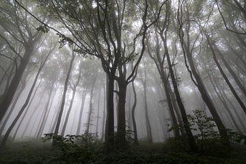 Paysage avec des arbres dans le brouillard, forêt sur Ger Beekes