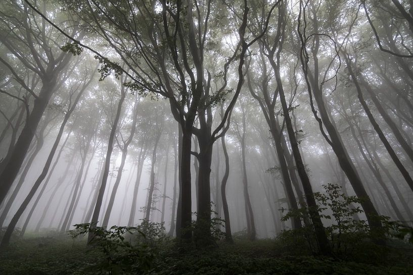 Gestalten Sie mit Bäumen im Nebel, Wald in den Balkan von Ger Beekes