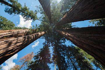Sequoia National Park von Nicolas Ros