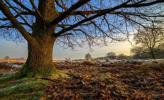 Boom in Winterse Duinen van Peter Bolman