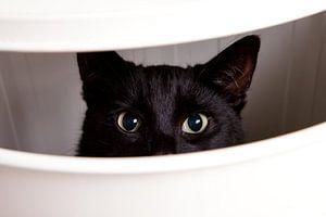 Glurende kat van