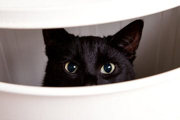 Glurende kat van Christiaan Onrust