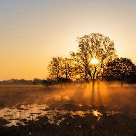 Sonne und Nebel von Anneke Hooijer