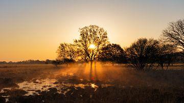 Zon en mist