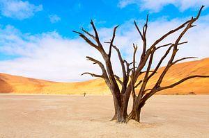 Kunst in de woestijn van