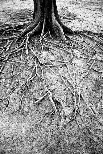 Wortels van een boom op een eiland | Indonesië
