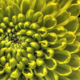Fluorescente spiraal van Mike Bing