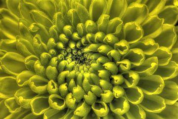 Fluoreszierende Spirale von Mike Bing
