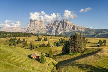 L'été sur l'Alpe di Siusi dans le Tyrol du Sud