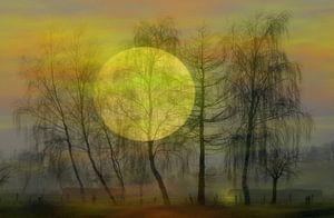 Moonlight van Vera Laake