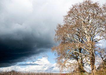 Zon en regen, met een mooie oude boom van Sense Photography