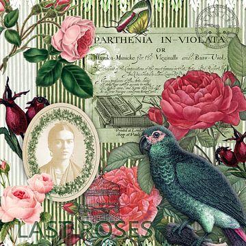 Letzte Rose von christine b-b müller