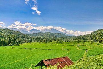 Reisfelder auf Bali von Eduard Lamping