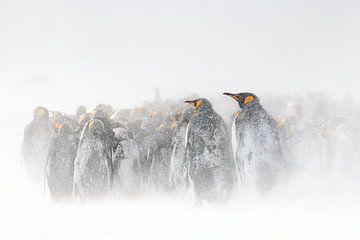 Königspinguine in einem Schneesturm von Jos van Bommel