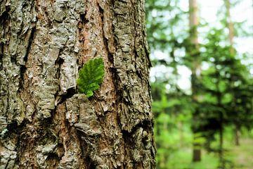Baumstruktur von Toni Stauche