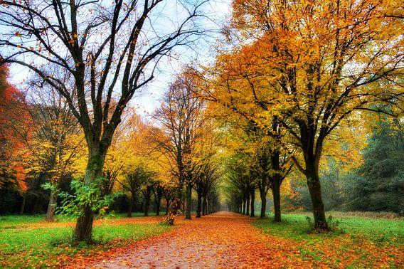 Herfst in het Amsterdamse bos van Dennis van de Water