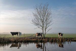 Koeien aan de waterkant kleurprofiel nummer 1 van Yvonne van Driel
