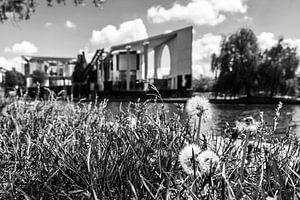 Pusteblumen vor dem Berliner Bundeskanzleramt