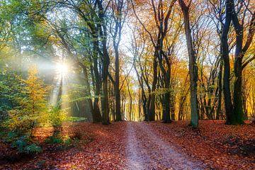 Speulderbos herfst ochtend licht van Dennis van de Water