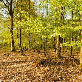 Lentegroen in het bos sur Tony Buijse