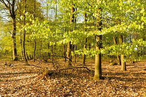 Lentegroen in het bos