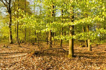Lentegroen in het bos von Tony Buijse