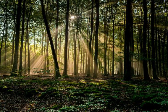 Zonnestralen in bos van Arthur Wolff