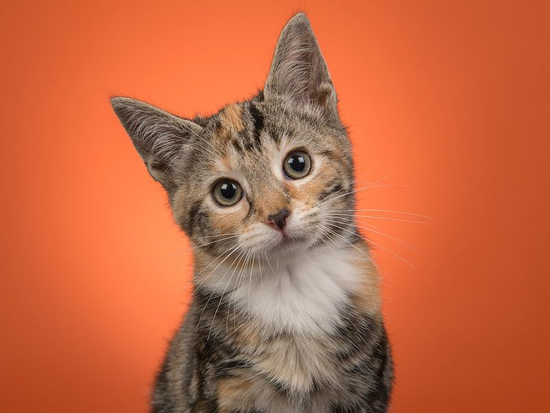 Kätzchen-Portrait in Orange von Elles Rijsdijk