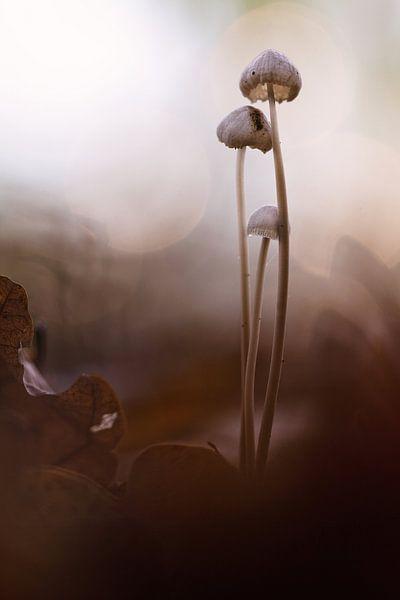 Gorgeous Nature van Bob Daalder