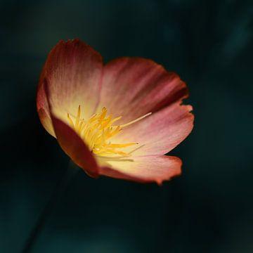 bloem van Saskia Schotanus