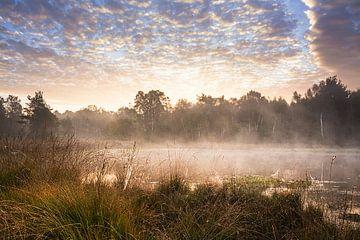Nebelschwaden  auf einem See  von Edith Albuschat