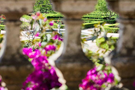 Botanische tuin in Belém van Ronne Vinkx