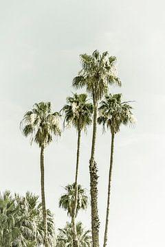 Palmbomen op het strand | Vintage van Melanie Viola