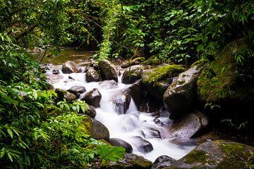 Beekje in tropisch regenwoud in Panama met groene planten en vegetatie van Michiel Dros