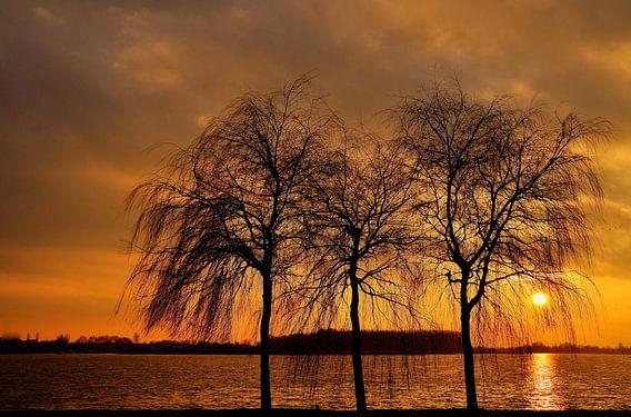 Bomen als silhouet.