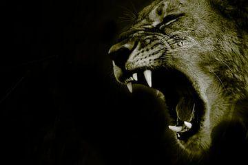 De brul van de leeuw van Sharing Wildlife