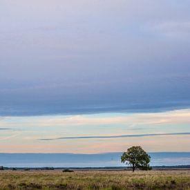 Nationaal Park Dwingelderveld van Margreet Frowijn