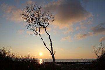 Abends auf Rügen von Ostsee Bilder