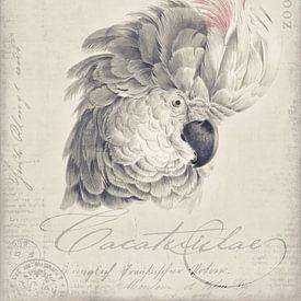 Kakadu von Andrea Haase