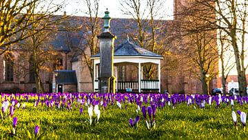 Frühling in Nisse (Zuid-Beveland) von Fotografie in Zeeland
